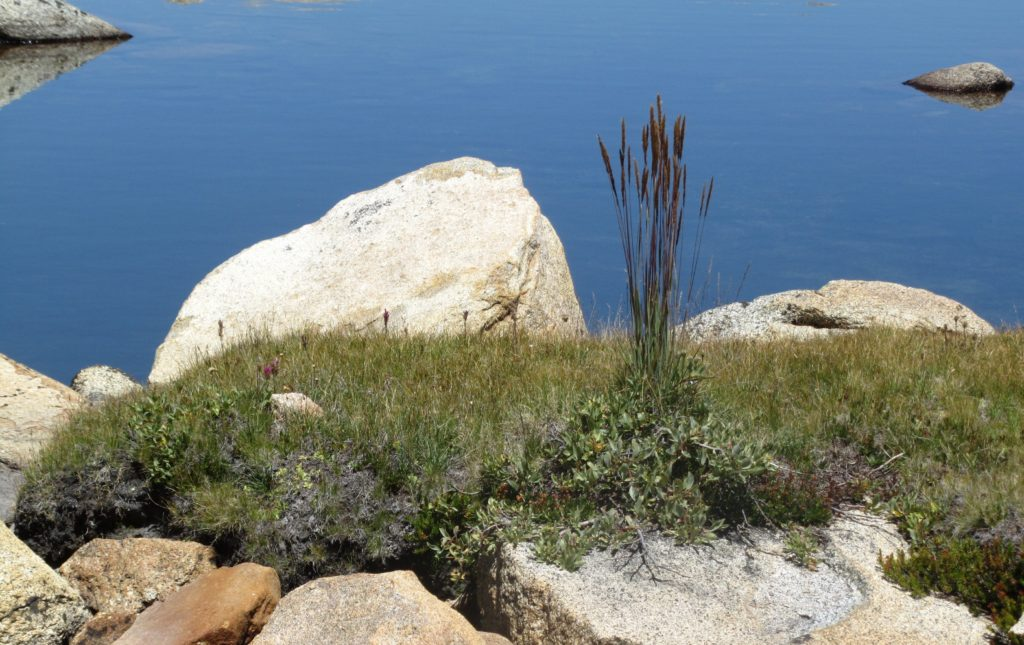 Grasses, rock, water at Upper Trout Lake